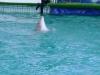 delfiny_ukraina5.jpg