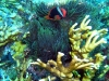 filipiny-apo-reef-29.jpg