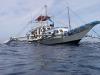 filipiny-apo-reef-30.jpg