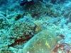 filipiny-apo-reef-33.jpg