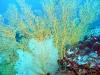 filipiny-apo-reef-37.jpg