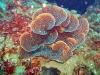 filipiny-apo-reef-40.jpg