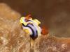 nurkowanie-na-filipinach-13