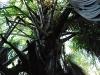 filipiny-pandan-2.jpg