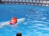 krym-delfiny-1.jpg