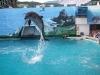 krym-delfiny-2.jpg