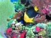 nurkowanie-cayo-largo12.jpg