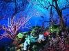 nurkowanie-cayo-largo15.jpg
