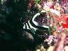 nurkowanie-cayo-largo5.jpg