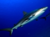 rekiny-na-kubie10.jpg