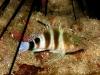 rekiny-na-kubie2.jpg