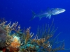 rekiny-na-kubie20.jpg