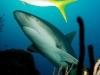 rekiny-na-kubie33.jpg