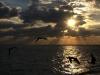 rekiny-na-kubie38.jpg