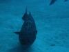 nurkowanie-kuba1.jpg