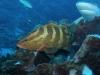 nurkowanie-kuba10.jpg