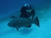 nurkowanie-kuba11.jpg