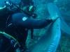 nurkowanie-kuba13.jpg