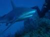 nurkowanie-kuba15.jpg
