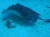 nurkowanie-kuba17.jpg