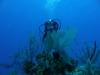 nurkowanie-kuba21.jpg