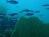 nurkowanie-kuba22.jpg