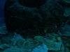 nurkowanie-kuba24.jpg