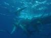 nurkowanie-kuba25.jpg