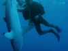 nurkowanie-kuba26.jpg
