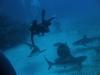 nurkowanie-kuba4.jpg