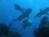 nurkowanie-kuba6.jpg