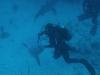 nurkowanie-kuba7.jpg