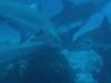 nurkowanie-kuba8.jpg