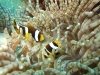 mozambik-tofo-nurkowanie-7.jpg