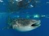 mozambik-tofo-rekiny-wielorybie-1.jpg