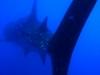 mozambik-tofo-rekiny-wielorybie-3.jpg