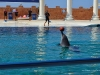 delfiny-i-zareczyny-004