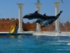 delfiny-i-zareczyny-005