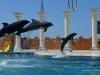 delfiny-i-zareczyny-006