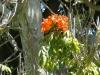 rpa-mozambik-przyroda-1.jpg