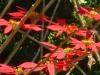 rpa-mozambik-przyroda-2.jpg