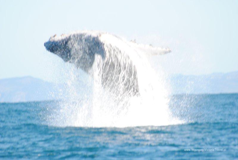 Wieloryb w pląsach - kolejna sesja