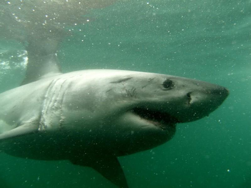 nurkowanie-z-rekinami-w-klatce-5