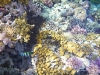 Nurkowanie na Zabargad i Rocky Islands
