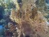 Nurkowanie na Elphistone Reef