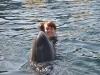 trening-delfinow-i-vip-z-delfinami1.jpg