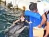 trening-delfinow-i-vip-z-delfinami7.jpg