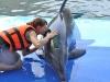 trening-delfinow-i-vip-z-delfinami8.jpg