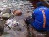 Wenezuela Canaima - kurczaki na kolację oprawiane w górskiej rzece