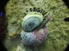 wenezuela-los-roques-005